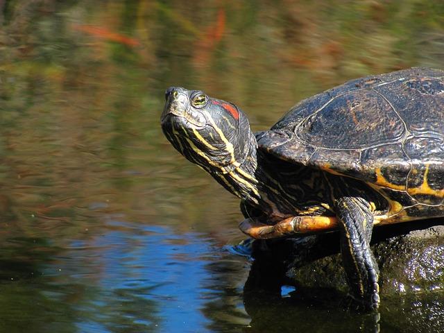 turtle-654042_640