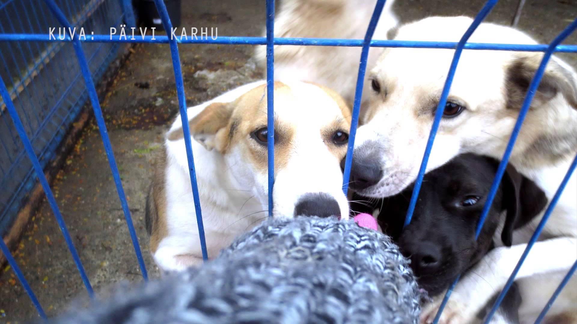 Mari-Jäntti-Rescue-koirat