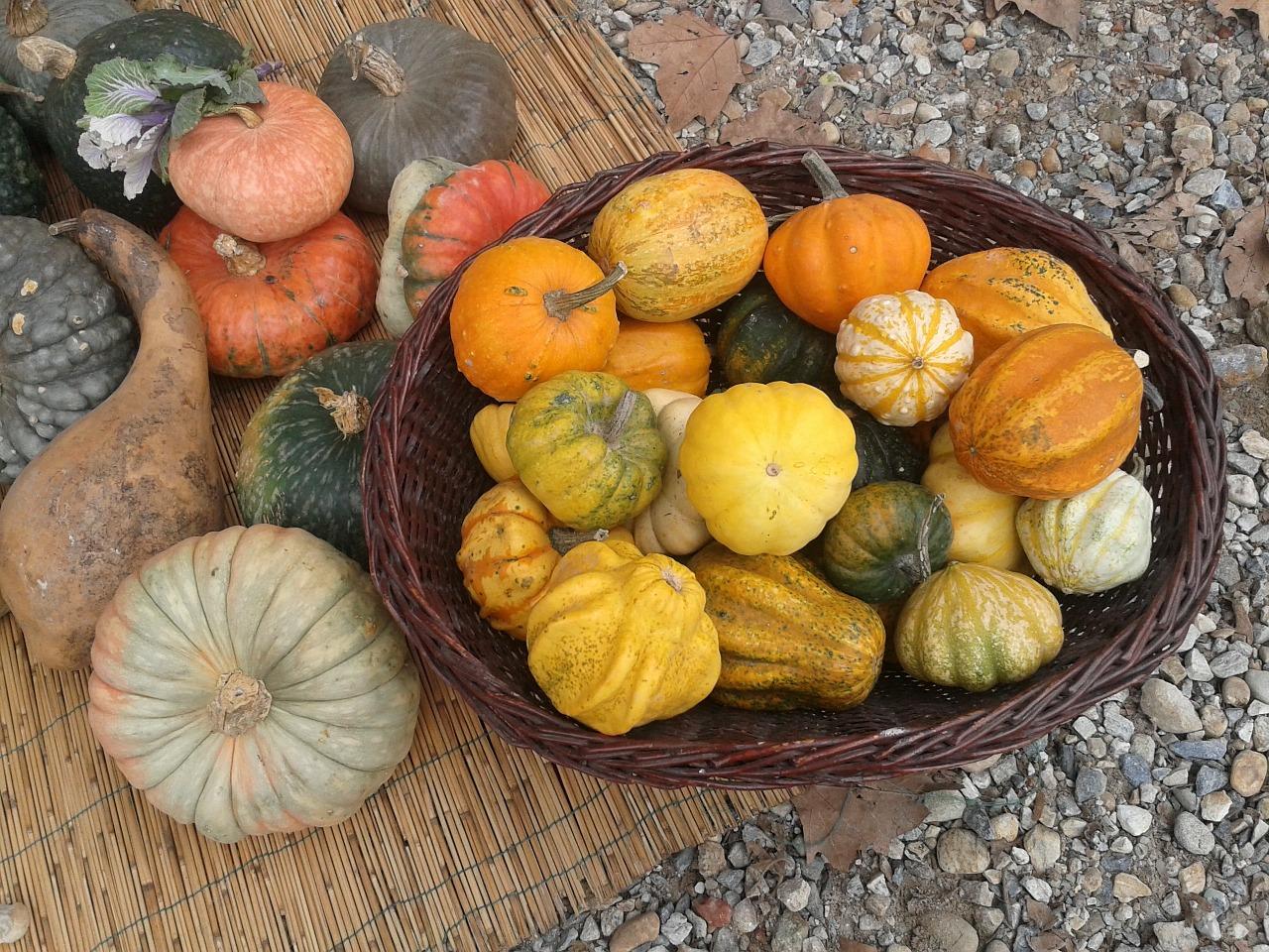 pumpkins-597293_1280