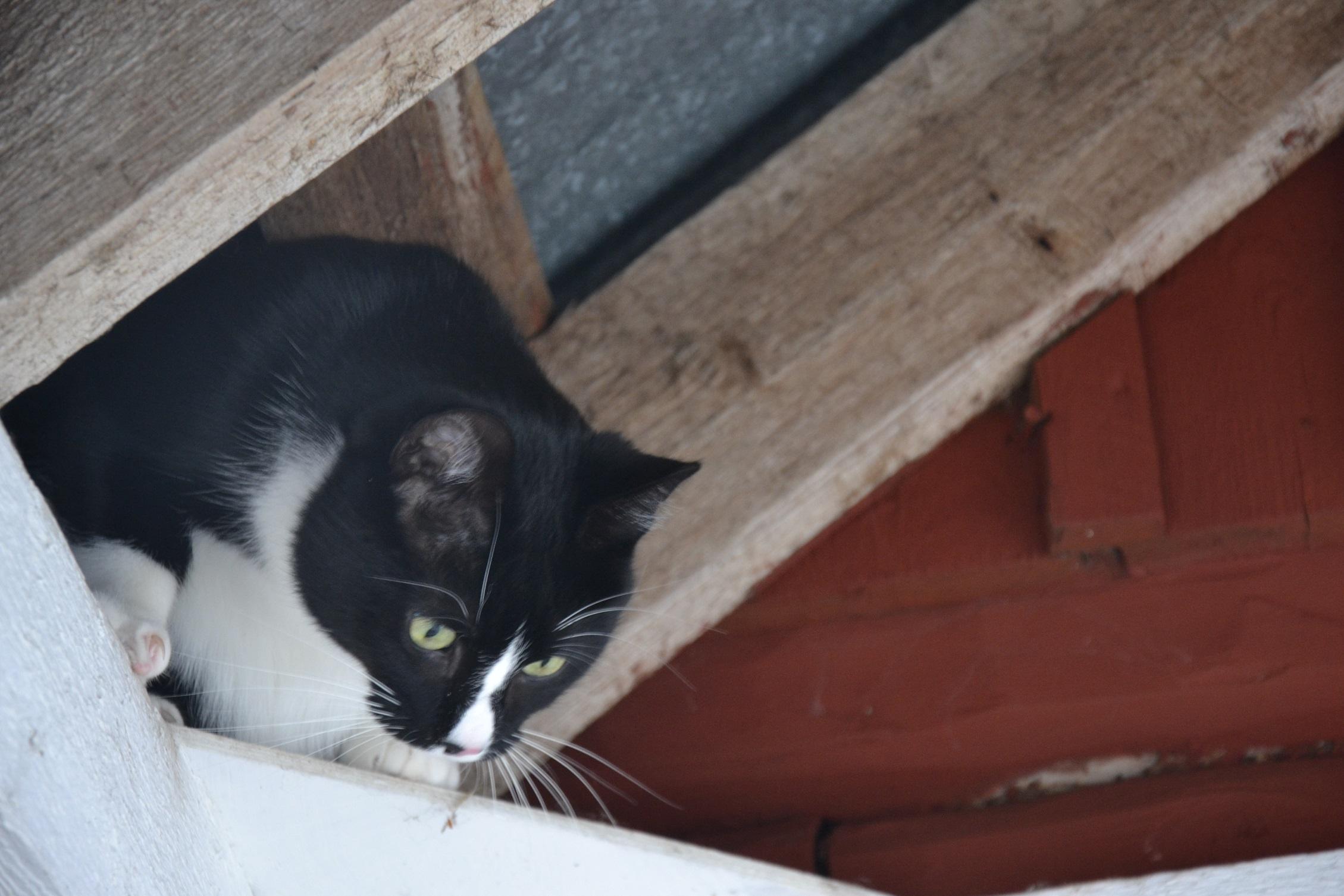 Eläinkodin kissat pääsevät myös jaloittelemaan